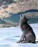 στενός ουρλιάζοντας επάνω το λύκο Στοκ εικόνα με δικαίωμα ελεύθερης χρήσης