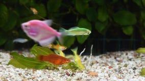 Στενός ο επάνω του συνόλου δεξαμενών ενυδρείων των ψαριών απόθεμα βίντεο