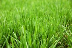 στενός πράσινος επάνω γυα& Στοκ Εικόνες