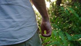 Στενός πυροβολισμός ενός χεριού προσώπων ` s που περπατά σε μια ζούγκλα απόθεμα βίντεο