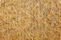 στενός χρυσός σανός δεμάτ&omeg Στοκ Εικόνες