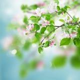 στενό δέντρο ανθών μήλων επάνω Στοκ εικόνες με δικαίωμα ελεύθερης χρήσης