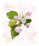 στενό δέντρο ανθών μήλων επάνω watercolor Στοκ φωτογραφία με δικαίωμα ελεύθερης χρήσης