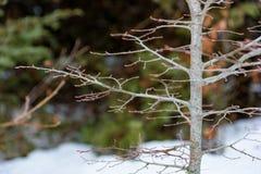 στενό δέντρο κλάδων επάνω Στοκ φωτογραφίες με δικαίωμα ελεύθερης χρήσης