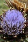στενό αγκάθι κάρδων λουλουδιών επάνω στοκ φωτογραφίες