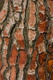 στενό βλασταημένο δέντρο φλοιών επάνω Εθνικοί βοτανικοί κήποι Δουβλίνο Ιρλανδία στοκ φωτογραφίες με δικαίωμα ελεύθερης χρήσης