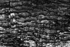 στενό βλασταημένο δέντρο φλοιών επάνω στοκ φωτογραφίες