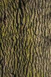 στενό βλασταημένο δέντρο φλοιών επάνω Στοκ φωτογραφία με δικαίωμα ελεύθερης χρήσης