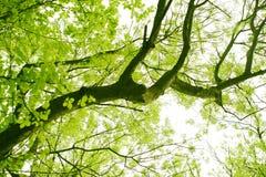 στενό δάσος επάνω Στοκ εικόνα με δικαίωμα ελεύθερης χρήσης