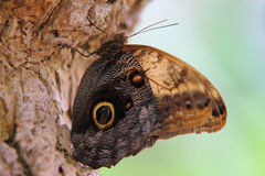 στενό δέντρο πεταλούδων φ&lam Στοκ φωτογραφία με δικαίωμα ελεύθερης χρήσης