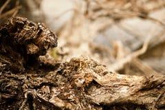 στενό δέντρο σύστασης φλο& Στοκ Εικόνα
