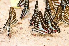 Στενό επάνω σχέδιο πεταλούδων Στοκ Εικόνα