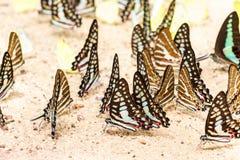 Στενό επάνω σχέδιο πεταλούδων Στοκ φωτογραφία με δικαίωμα ελεύθερης χρήσης