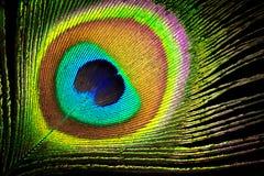 Στενό επάνω υπόβαθρο φτερών Peacock Στοκ φωτογραφία με δικαίωμα ελεύθερης χρήσης