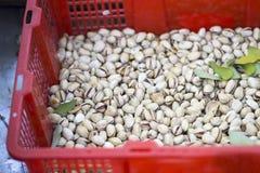 στενό λευκό φυστικιών καρυδιών ανασκόπησης επάνω Στοκ εικόνες με δικαίωμα ελεύθερης χρήσης