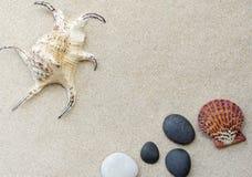 στενό θαλασσινό κοχύλι άμμου επάνω Στοκ εικόνα με δικαίωμα ελεύθερης χρήσης