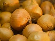στενό κρεμμύδι up2 Στοκ Εικόνες