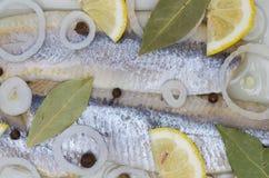 στενό κρεμμύδι ρεγγών επάνω Στοκ Εικόνες
