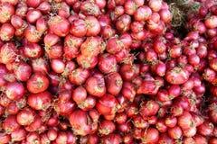 στενό κόκκινο κρεμμύδι κρεμμυδιών επάνω Στοκ Εικόνες