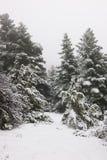 Στενό μονοπάτι στο δάσος πεύκων κάτω από το χιόνι Στοκ Εικόνα