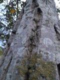 Στενό ξύλο δέντρων Στοκ φωτογραφίες με δικαίωμα ελεύθερης χρήσης