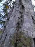 Στενό ξύλο δέντρων στοκ φωτογραφίες
