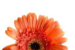 στενό λουλούδι επάνω Στοκ εικόνες με δικαίωμα ελεύθερης χρήσης