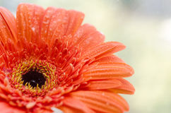 στενό λουλούδι επάνω Στοκ εικόνα με δικαίωμα ελεύθερης χρήσης