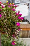 στενό λουλούδι επάνω Στοκ Φωτογραφία