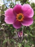 στενό λουλούδι επάνω Στοκ φωτογραφία με δικαίωμα ελεύθερης χρήσης