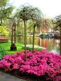 στενό λουλούδι Πετρούπολη Ρωσία Άγιος σπορείων επάνω Στοκ Φωτογραφία