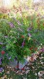 στενό λουλούδι Πετρούπολη Ρωσία Άγιος σπορείων επάνω Στοκ Εικόνες