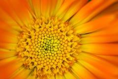 στενό πορτοκάλι λουλουδιών επάνω στοκ εικόνα με δικαίωμα ελεύθερης χρήσης