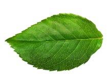στενό πράσινο φύλλο επάνω Στοκ φωτογραφία με δικαίωμα ελεύθερης χρήσης
