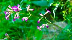 στενό ροζ λουλουδιών επάνω χρωματισμένο καλοκαίρι φύσης χεριών γίνοντα απεικόνιση στοκ φωτογραφία