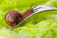 στενό σαλιγκάρι πιάτων επάν&o Στοκ Φωτογραφίες