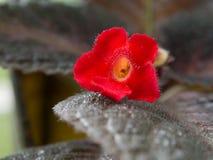 στενό σκοτεινό orchid λουλουδιών ανασκόπησης επάνω στοκ εικόνα με δικαίωμα ελεύθερης χρήσης