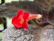 στενό σκοτεινό orchid λουλουδιών ανασκόπησης επάνω στοκ φωτογραφία με δικαίωμα ελεύθερης χρήσης