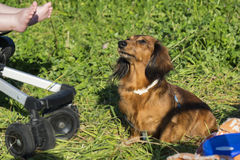στενό σκυλί επάνω Στοκ εικόνες με δικαίωμα ελεύθερης χρήσης