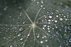 στενό τέλειο επάνω ύδωρ πρωινού φύλλων χλόης σταγονίδιων δροσιάς Στοκ Φωτογραφίες