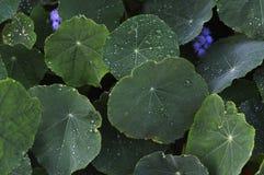 στενό τέλειο επάνω ύδωρ πρωινού φύλλων χλόης σταγονίδιων δροσιάς Στοκ Φωτογραφία