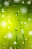 στενό τέλειο επάνω ύδωρ πρωινού φύλλων χλόης σταγονίδιων δροσιάς Στοκ εικόνες με δικαίωμα ελεύθερης χρήσης