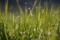 στενό τέλειο επάνω ύδωρ πρωινού φύλλων χλόης σταγονίδιων δροσιάς Στοκ φωτογραφία με δικαίωμα ελεύθερης χρήσης