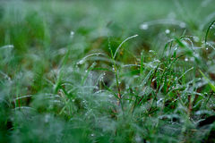 στενό τέλειο επάνω ύδωρ πρωινού φύλλων χλόης σταγονίδιων δροσιάς Στοκ Εικόνες