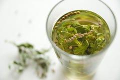 στενό τσάι μεντών επάνω Στοκ Φωτογραφίες