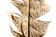 στενό φτερό 5 επάνω στοκ φωτογραφίες με δικαίωμα ελεύθερης χρήσης