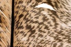 στενό φτερό 6 επάνω στοκ φωτογραφία με δικαίωμα ελεύθερης χρήσης