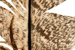 στενό φτερό 8 επάνω στοκ φωτογραφία με δικαίωμα ελεύθερης χρήσης