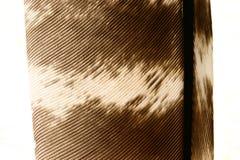 στενό φτερό 9 επάνω Στοκ Εικόνες