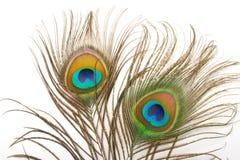 στενό φτερό peacock επάνω Στοκ φωτογραφία με δικαίωμα ελεύθερης χρήσης